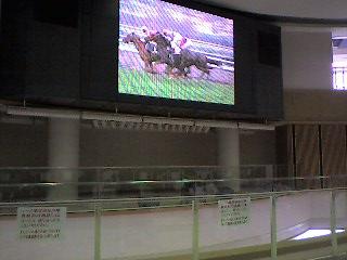 京都競馬場です