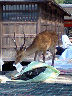鹿をナメてはいけません