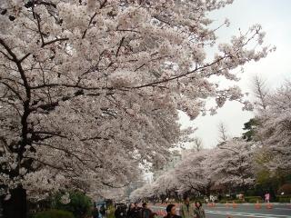 Sakurawark